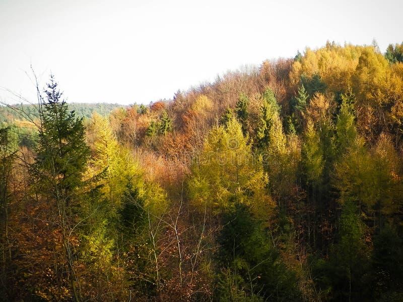 Jesienny lasu krajobraz zdjęcie stock