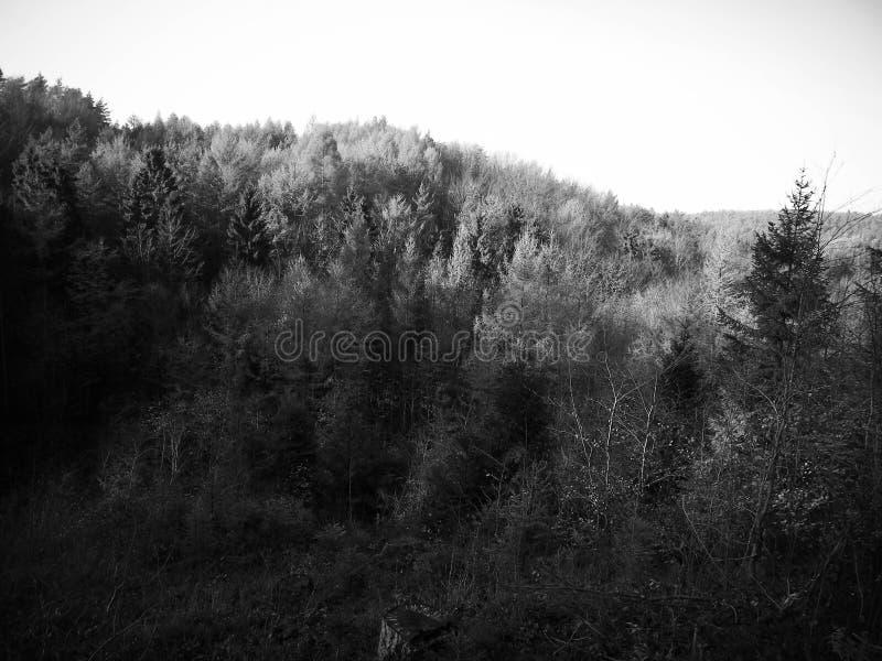 Jesienny lasu krajobraz obrazy stock