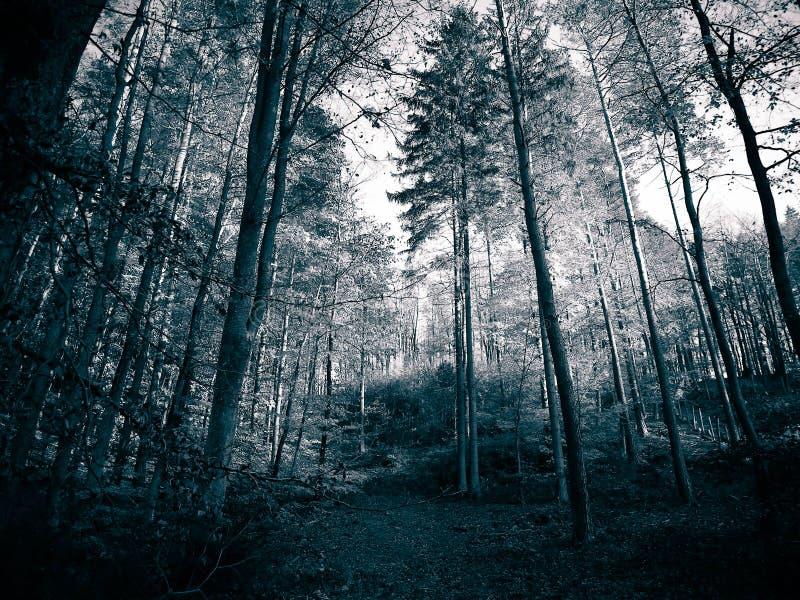 Jesienny lasu krajobraz fotografia stock