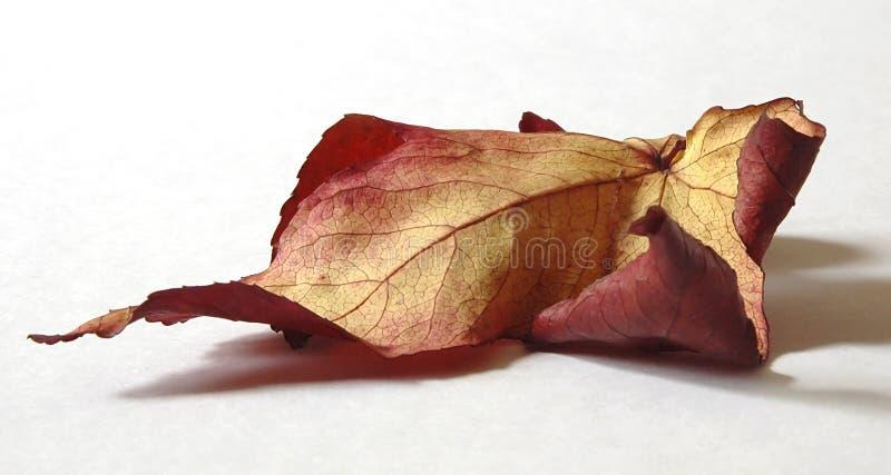 Download Jesienny liść zdjęcie stock. Obraz złożonej z spadek, sezon - 127416