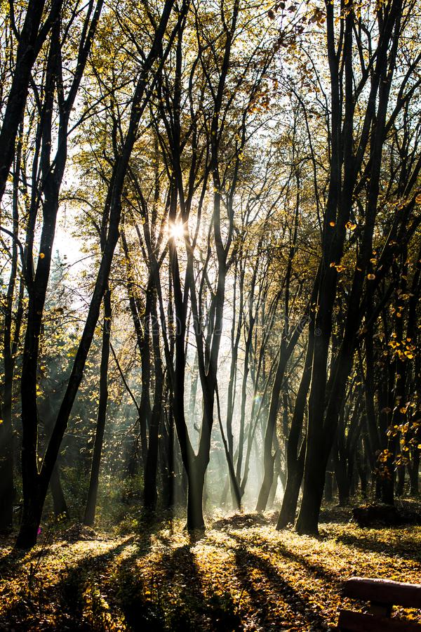 Jesienny mglisty ranek obraz royalty free