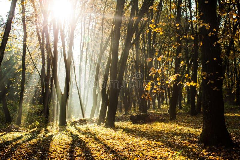 Jesienny mglisty ranek zdjęcia royalty free