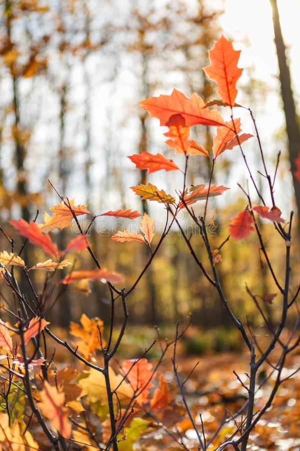 Jesienny nastrój z kolorowymi liśćmi obraz stock