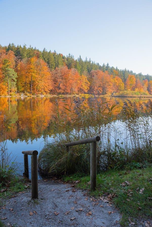 Jesienny staw z wejściową pomocą dla kąpać się obraz royalty free