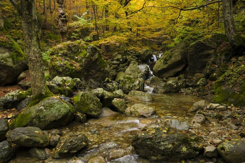 Jesienny strumień zdjęcie stock