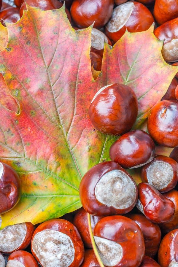 Jesienny tło liść klonowy i kasztany zdjęcie stock