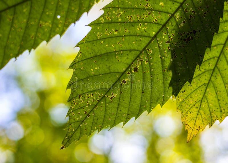 Jesienny temat abstrakcyjny niebo i zielony liść zdjęcie stock