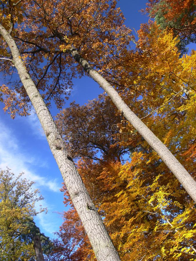 Jesienny ulistnienie z kolorem żółtym pomarańcze z niebieskim niebem w pełnym słońcu II fotografia royalty free