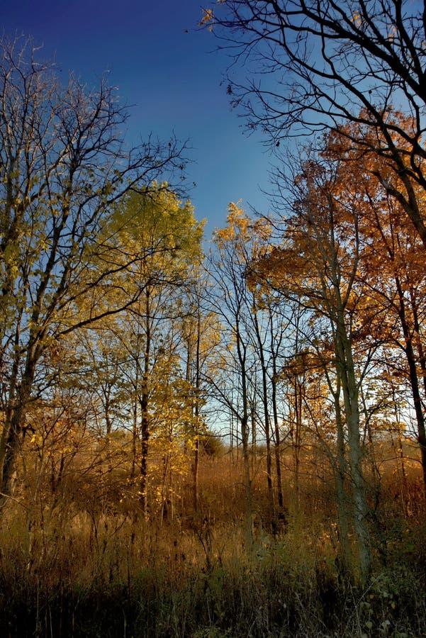 Jesienny wschód słońca na łące obrazy stock