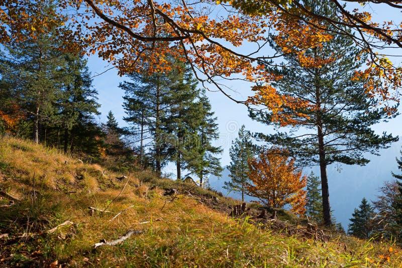 Jesienny zbocze las zdjęcie royalty free