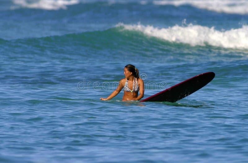 Jess Shedlock Surfer Girl stock photos