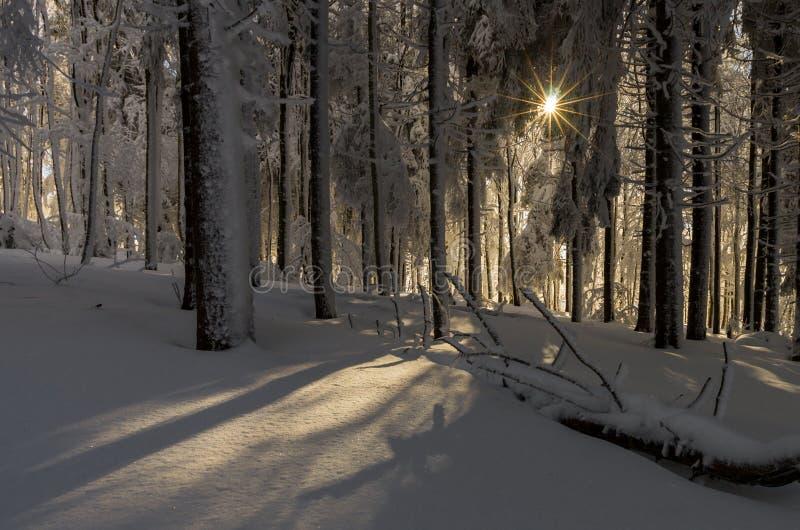 jest całkowicie szczęśliwy i jeśli obraz góry dziękuję zimy są używane w, fotografia stock