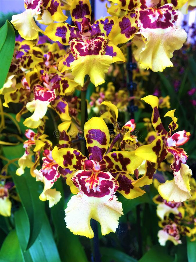Jest colourful! Orchidea i facsynacja zdjęcia stock
