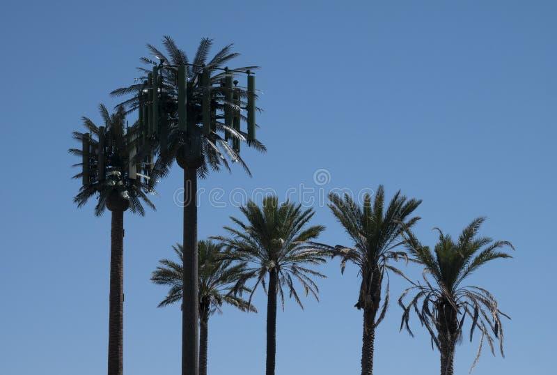 Jest drzewko palmowe ja Ja jest komórki wierza - Żadny - zdjęcie royalty free