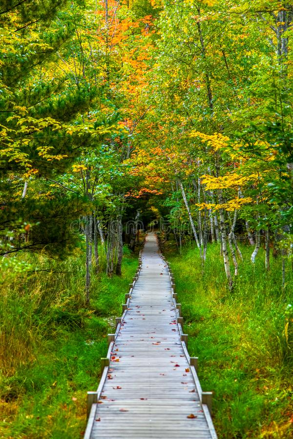 Jesup Trail with autumn colors in Acadia National Park royalty free stock images