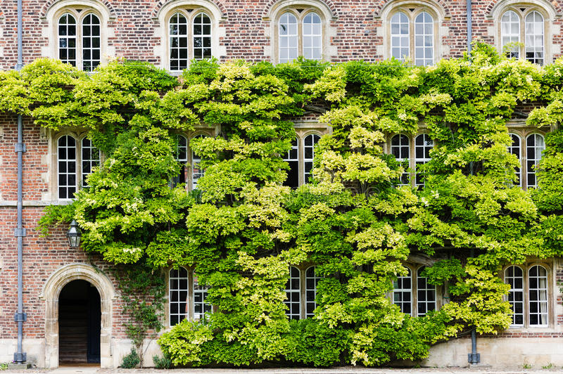 Download Jesus college stock image. Image of wall, university - 26593409