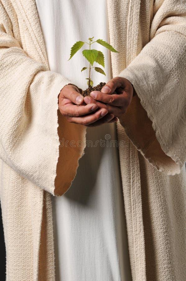 Jesus entrega prender uma planta fotografia de stock
