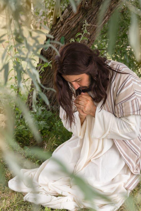 Jesus na agonia que reza no jardim das azeitonas fotos de stock