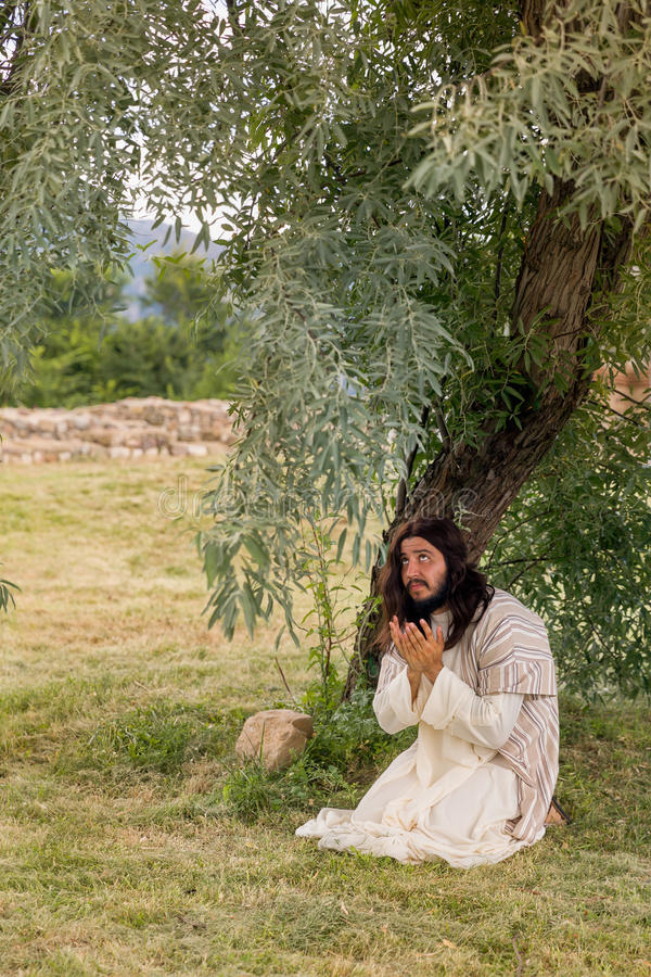 Jesus que reza no gethsemane imagem de stock royalty free
