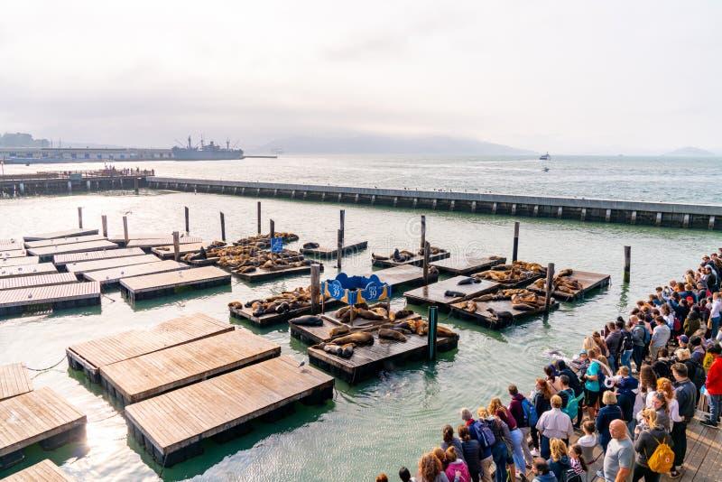 Jetée célèbre 39 avec des otaries à San Francisco, Etats-Unis Vue d'île d'Alcatraz photo stock