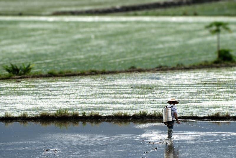 jet d'insecticide de fermier photo stock