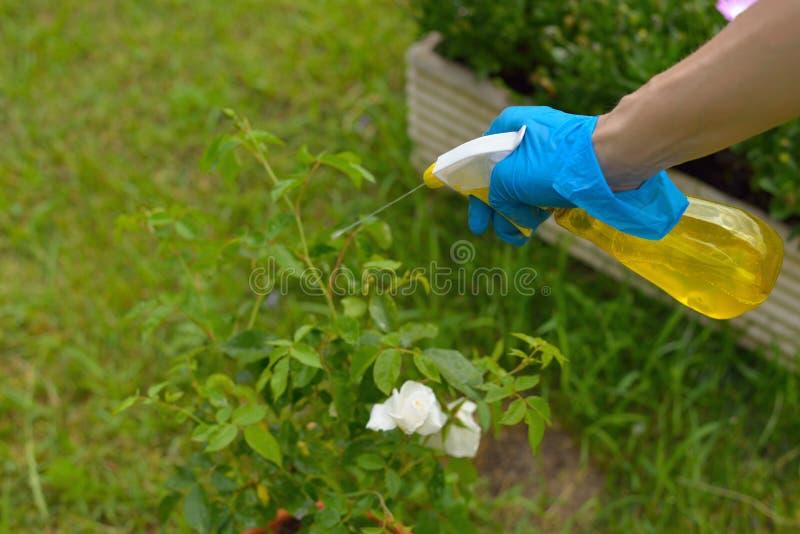 Jet de pesticide photos libres de droits