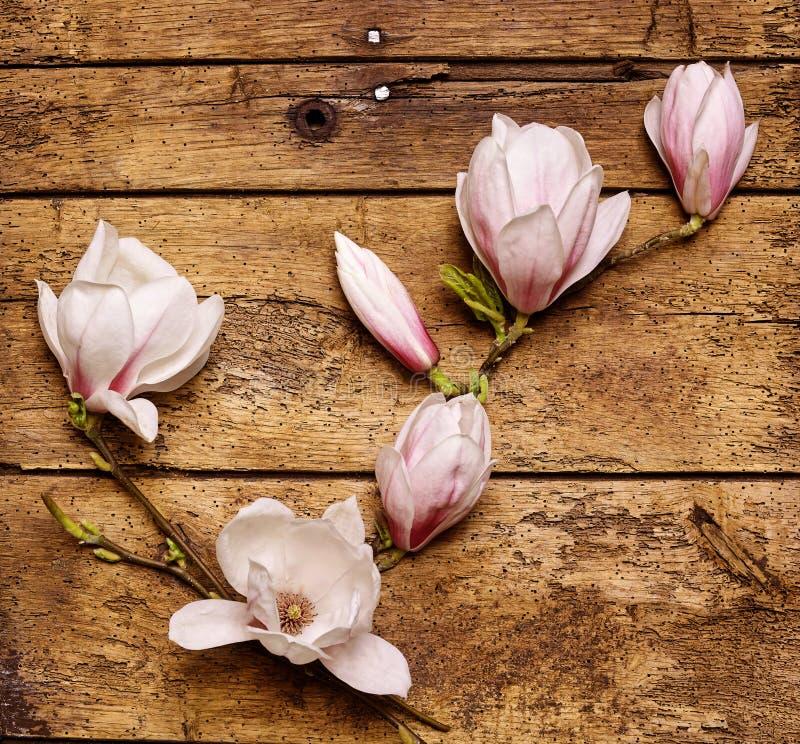 Jet des magnolias roses fraîches savoureuses photos stock