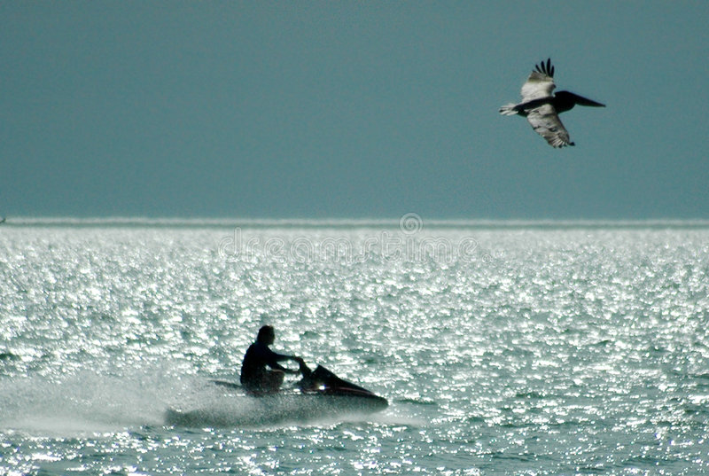 Jet-ski and pelican royalty free stock photography