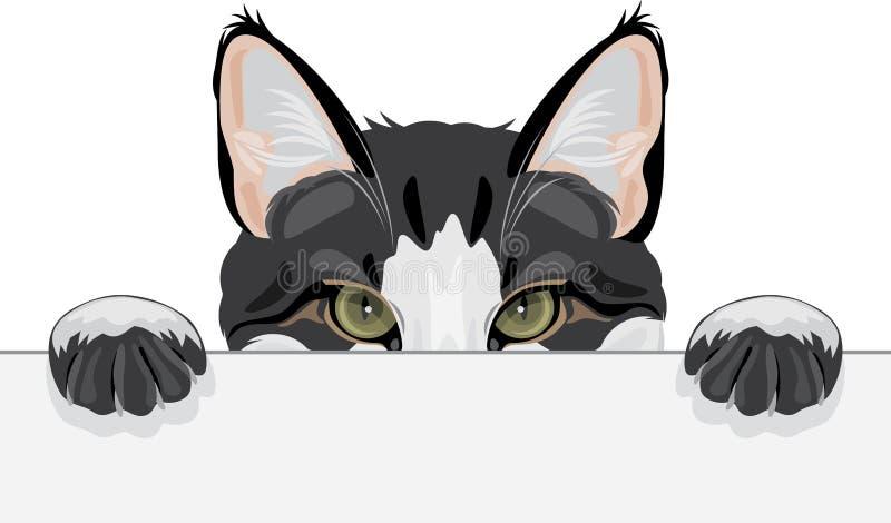 Jeter un coup d'oeil le chat drôle illustration de vecteur