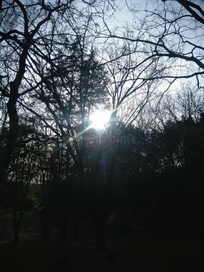 Jeter un coup d'oeil Sun photos stock