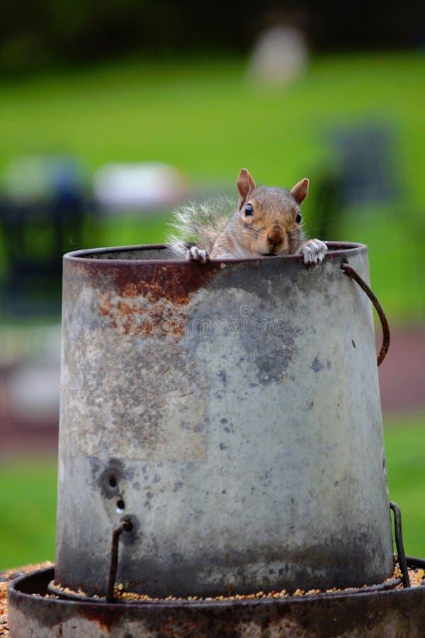 Jetez un coup d'oeil Boo Squirrel photos stock