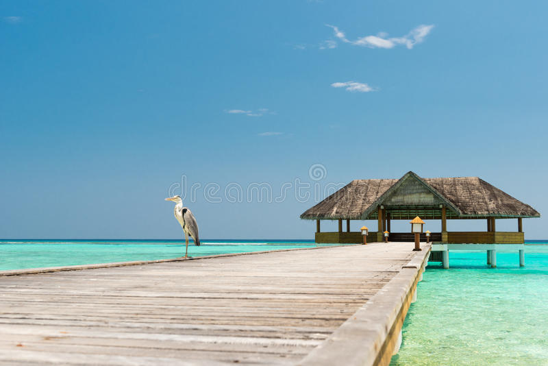 Jetty Over The Indian Ocean Stock Image