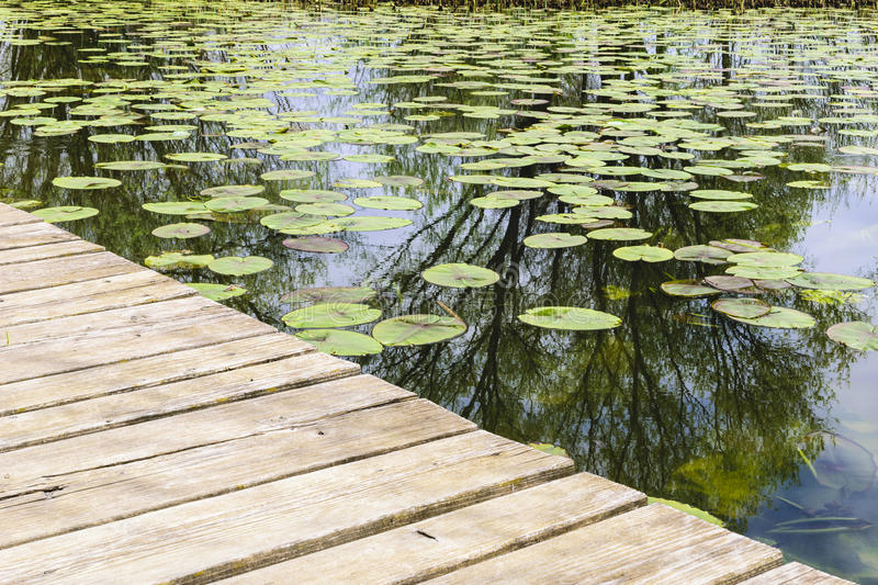 Jetty with water lilies. Image of a jetty with water lilies royalty free stock photography