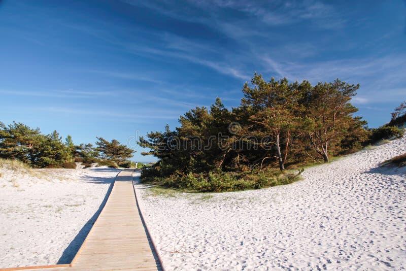 Jetty and white sandy beach on Bornholm stock photo