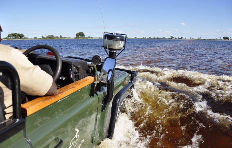 Jeu-commande dans les marais inondés d'Okavango-delta photographie stock