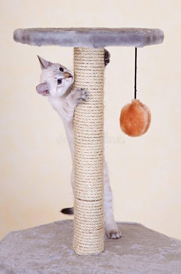 Jeu curieux de chaton images libres de droits