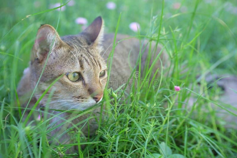 Jeu de chat dans le jardin photos libres de droits