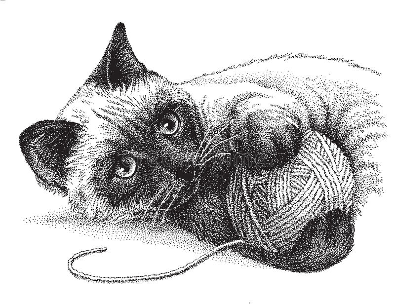 Jeu de chat siamois illustration stock