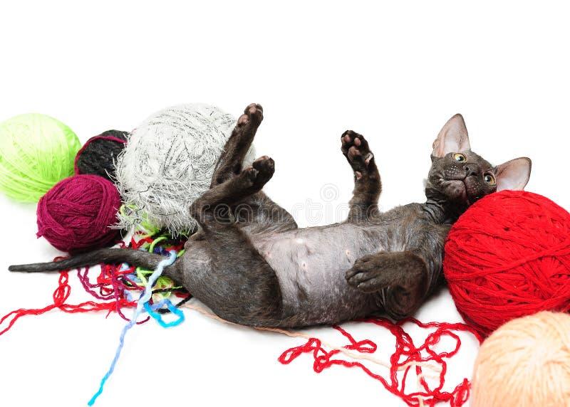 Jeu de chaton de Sphynx photographie stock libre de droits