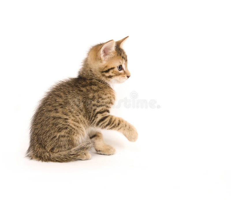 Jeu de chaton de Tabby photos stock