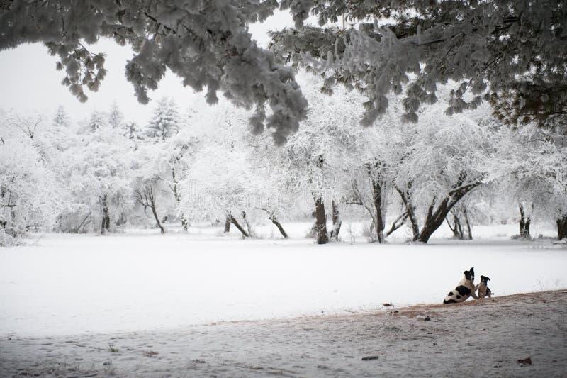 Jeu de chien et de chiot en parc d'hiver image libre de droits