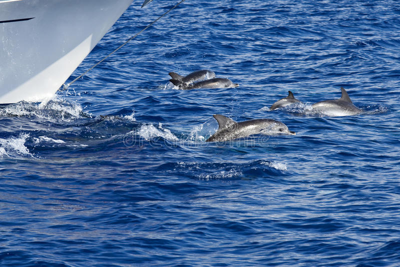 Jeu de dauphins photos stock