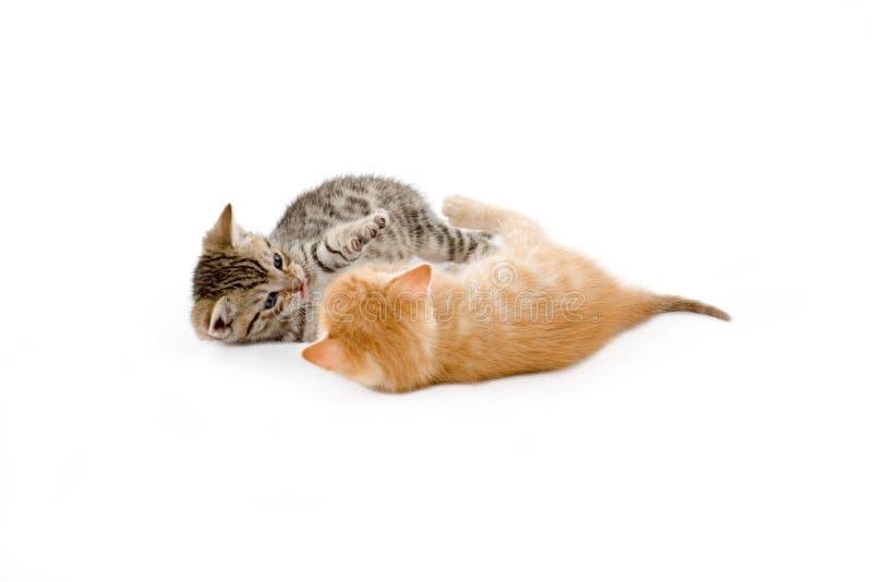 Jeu de deux chatons image stock