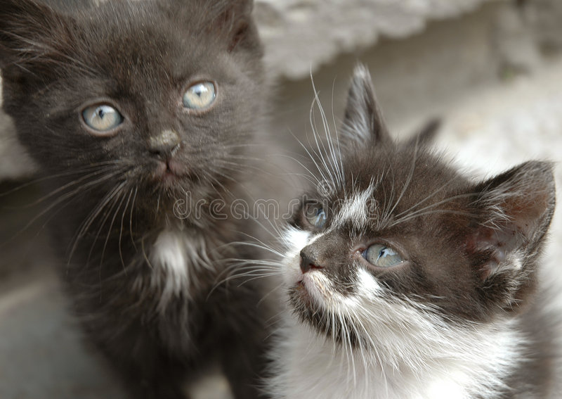 Jeu de deux petit chats photos stock