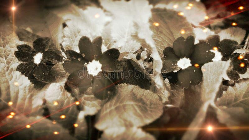 Jeu de lumière de fleur de jardin de ressort photo stock
