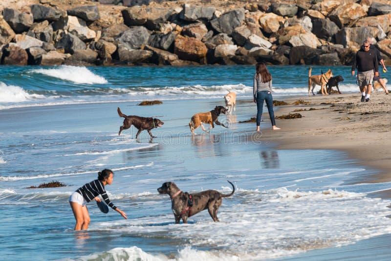 Jeu de personnes avec des chiens près de jetée de roche à la plage de chien à San Diego image libre de droits