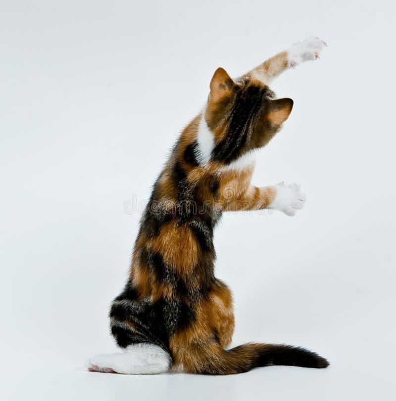 Jeu du chaton. image stock