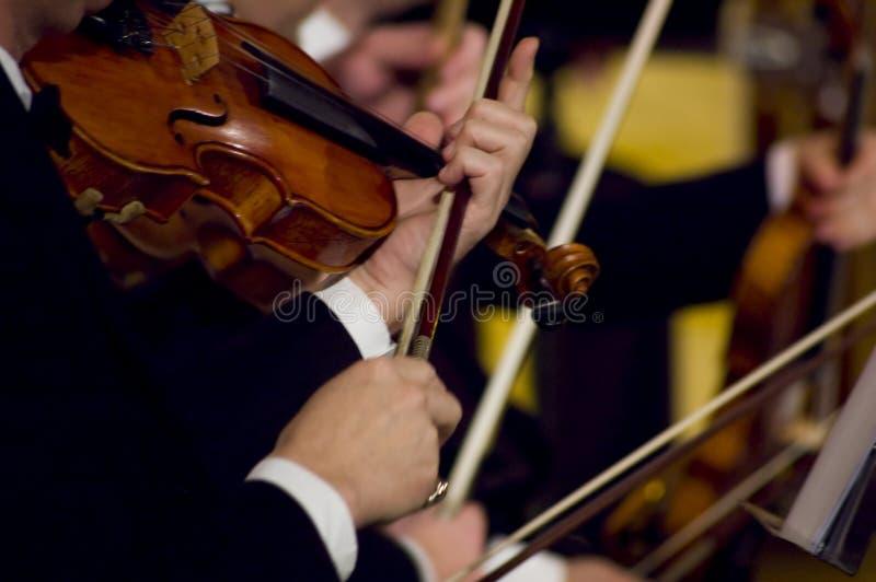 Jeu du violon photographie stock libre de droits