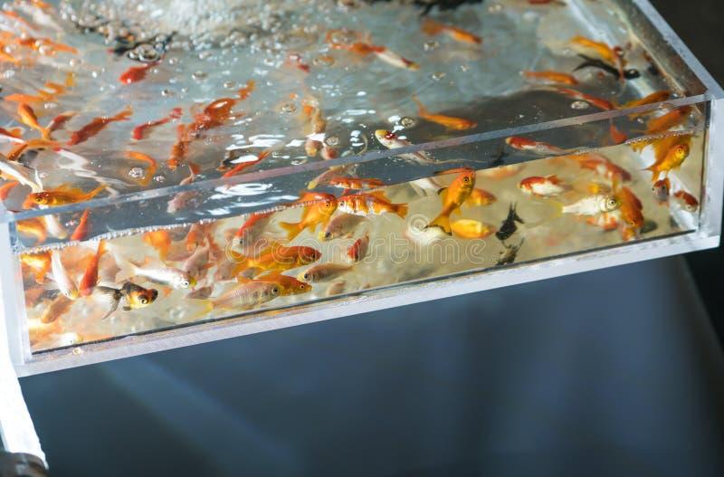 Jeu japonais de festival de poisson rouge images libres de droits