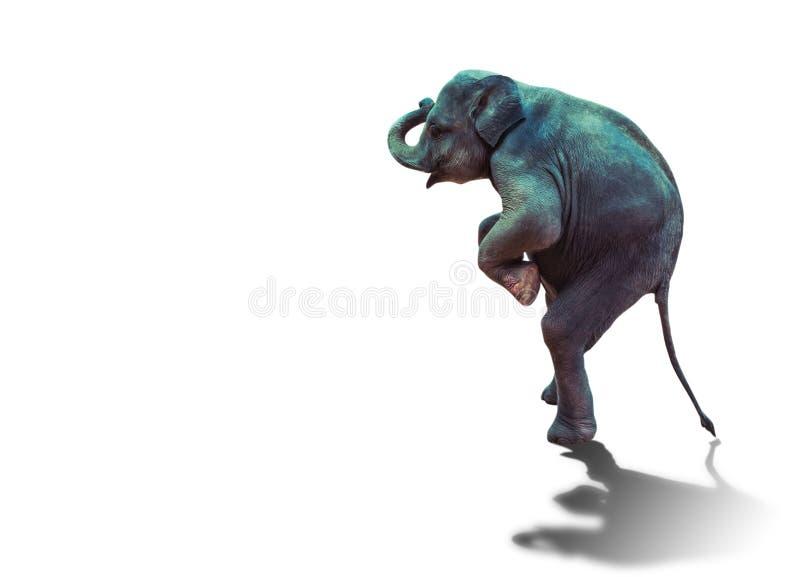 Jeune éléphant se tenant avec deux jambes de derrière sur le fond blanc photos libres de droits